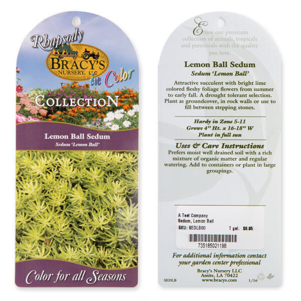 lemon-ball-sedum-tag
